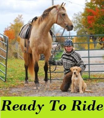 horses for sale in ontario. Horses for Sale ( Kawartha